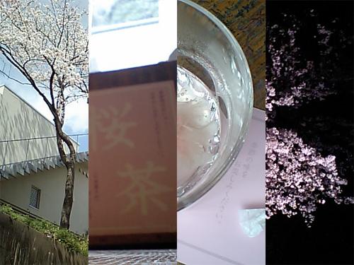 20100404sakura.jpg