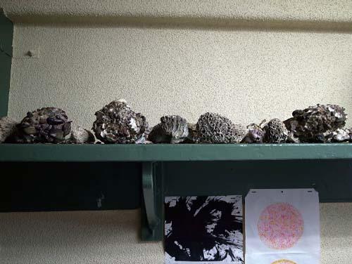 110909_capture_aihara_shell.jpg